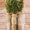 Fun Wedding Favor – Evergreen Trees