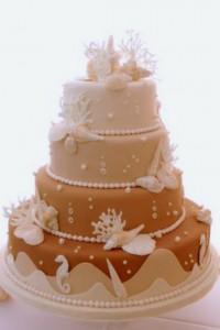 sand color ombre seashell cake