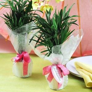 palm-tree-favors